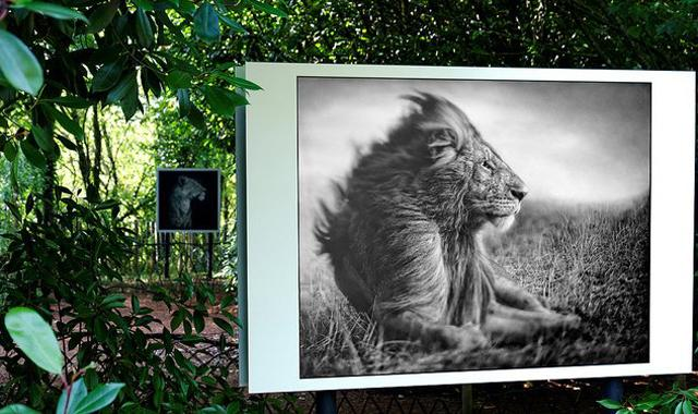 La Gacilly_Pictures Lion