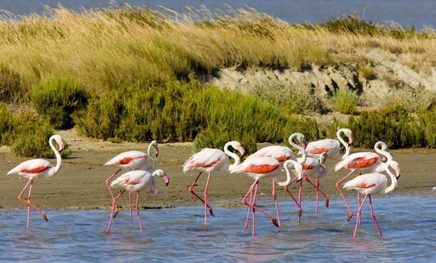 Rosa Flamingos in Scharen!