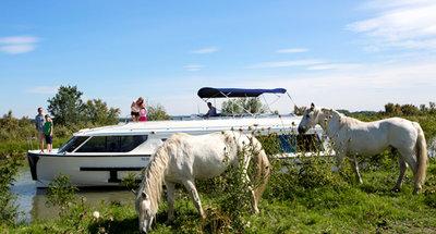 Weiße Camargue-Pferde