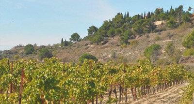 Sonnenverwöhnte Weinberge im Burgund