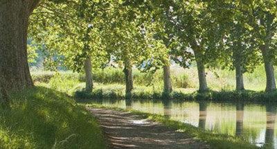 Von Bäumen gesäumter Abschnitt des Canal du Midi