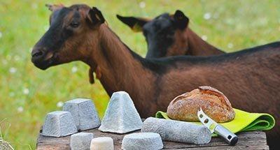 Ziegen und Käse
