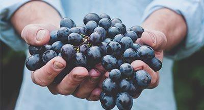 Köstliche Weintrauben
