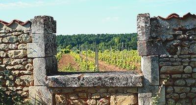 Weinberge und altes Haus in der Charente
