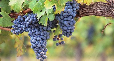 Weingut in Aquitanien