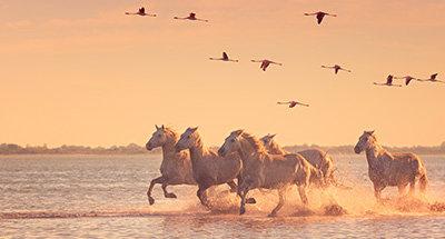 Wilde Pferde und rosa Flamingos beim Sonnenuntergang
