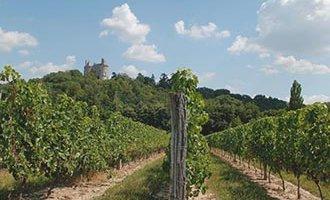 Weingut Buzet, Aquitanien