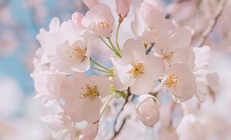 Weiße Blumen